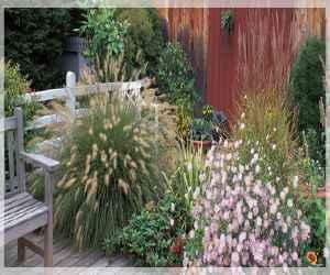 ornamental grass garden Ornamental Grass Garden