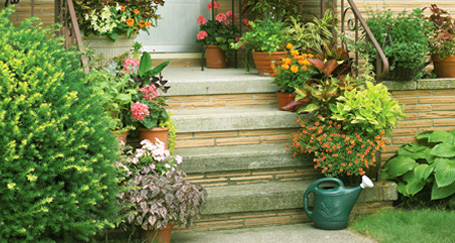 Add Spring Color to your garden Add Spring Color to Your Garden
