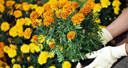 Garden for Full Season Blooms Garden for Full Season Blooms