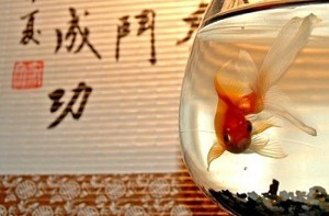 Feng Shui Water and Fish 300x197 Feng Shui: Water and Fish