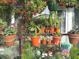 Annual And Perennial Plants Can Be Awesome Decoration For Your Flowering Balcony Or Terrace.