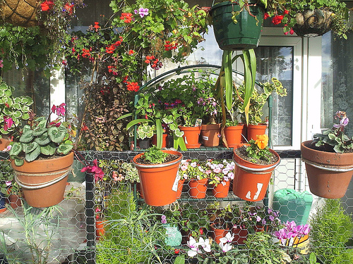 Annual and perennial plants can be awesome decoration for - Flowers for apartment balcony ...