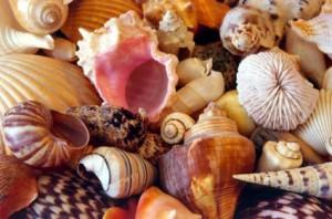 112 300x198 Sea Shells in Interior Design