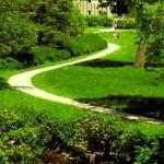 Landscape Design in June