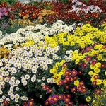 Flower Beds in Landscape Design